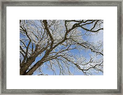 Winter Branch Framed Print by Tim Gainey
