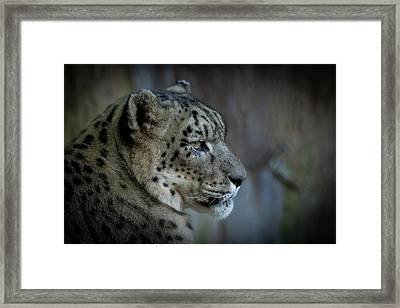 Framed Print featuring the photograph Snow Leopard by Roger Mullenhour