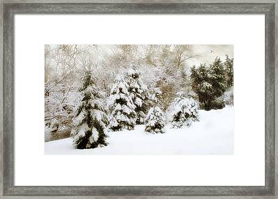 Snow Pines Framed Print by Jessica Jenney