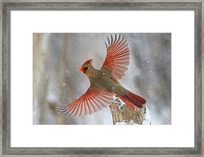 Snow Storm Framed Print by Mircea Costina