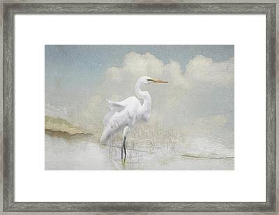 Snowy Egret Framed Print by Karen Lynch