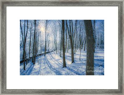 Snowy New England Forest Framed Print by Diane Diederich