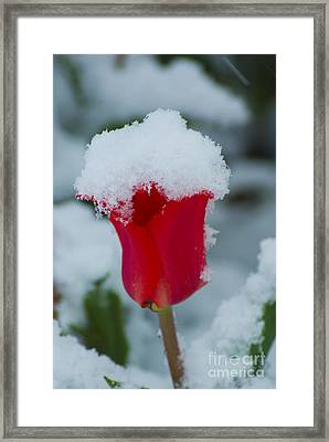 Snowy Red Riding Hood Framed Print