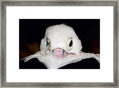 Snuggled Framed Print by Marion Cullen