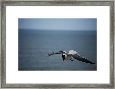 Framed Print featuring the photograph Soaring by Debbie Karnes