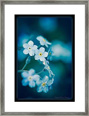 Framed Print featuring the photograph Soft Blue by Michaela Preston