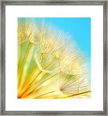 Soft Dandelion Flowers Framed Print