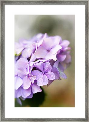 Soft Light Framed Print by Shelby  Young