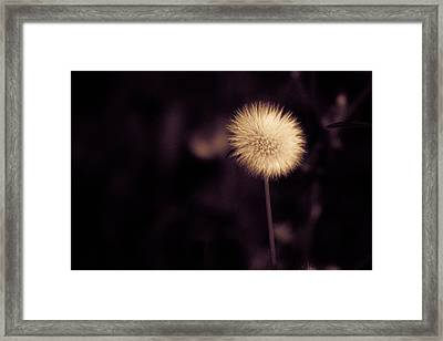 Tuft Framed Print by Lora Lee Chapman