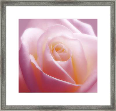 Soft Nostalgic Rose Framed Print