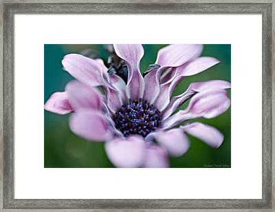Framed Print featuring the photograph Soft Purple by Michaela Preston
