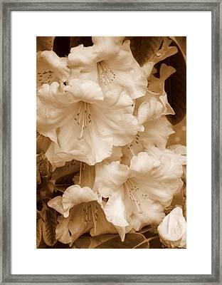 Soft Sepia Floral Framed Print