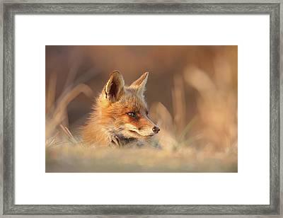 Softfox Framed Print