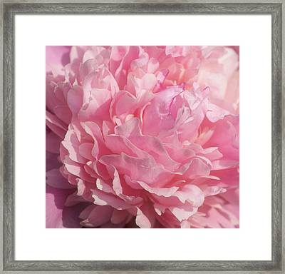 Softly Pink Framed Print by Sandy Keeton