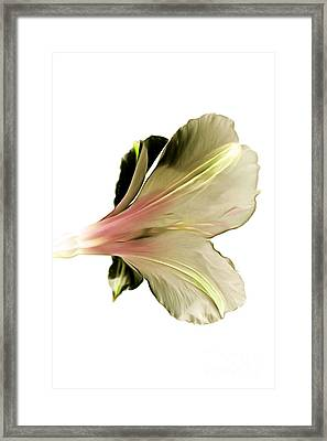 Softly Whisper Framed Print by Krissy Katsimbras