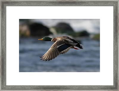 Solo Flight Framed Print