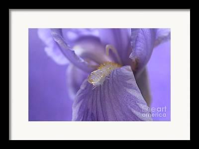 Close Focus Floral Photographs Framed Prints
