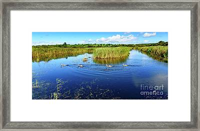 Somerset Levels Framed Print by Colin Rayner
