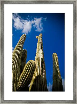 Sonoran Desert Framed Print by Patrick  Flynn