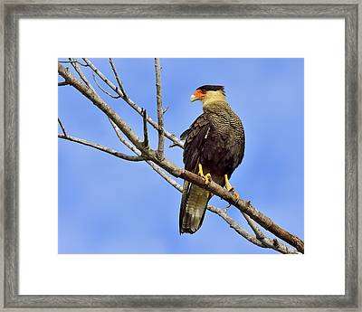 Southern Comfort Framed Print by Tony Beck