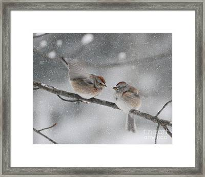 Sparrow Kiss Framed Print