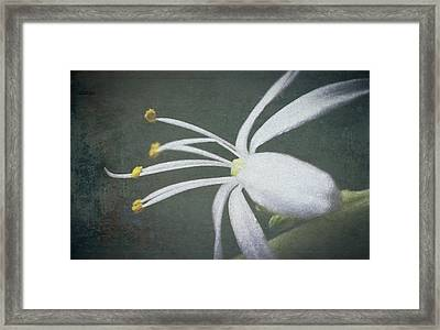Spider Plant Flower II Framed Print