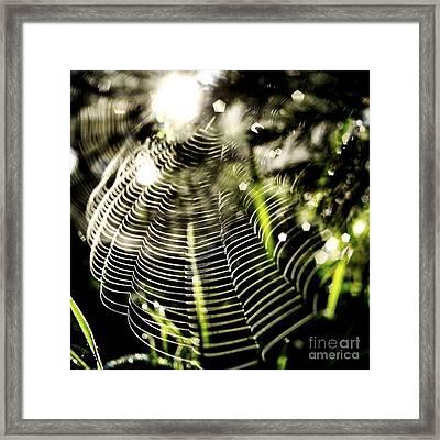 Spider's Web. Framed Print by Bernard Jaubert