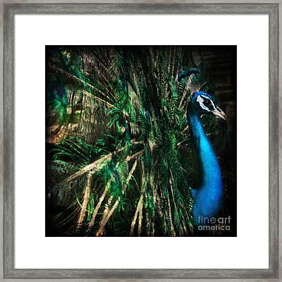 Splendour Framed Print by Andrew Paranavitana