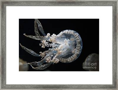 Spotted Jelly Framed Print