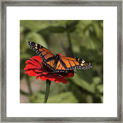 Spread Your Wings Framed Print by Don Spenner