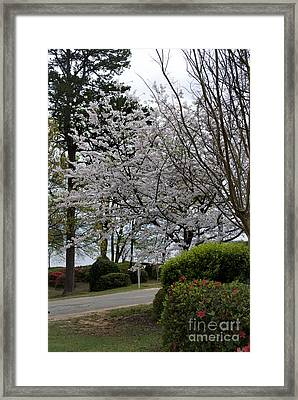 Spring At The Lake Framed Print by Skip Willits