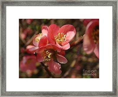 Spring Blooms Framed Print by Rebecca Overton