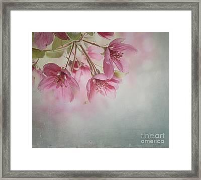Spring Blossom Framed Print by Jelena Jovanovic