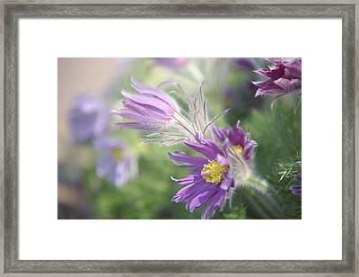 Spring Chorus Framed Print by Jenny Rainbow