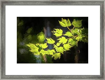 Spring Color Framed Print by Marvin Spates