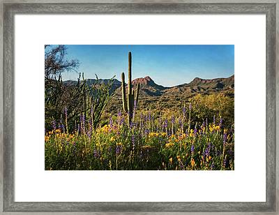 Framed Print featuring the photograph Spring In The Sonoran  by Saija Lehtonen