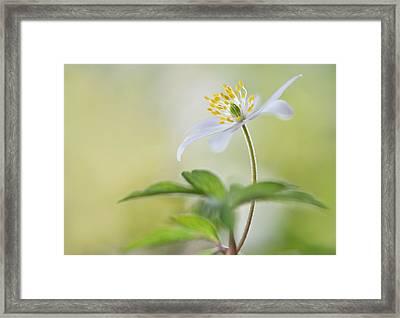 Spring Light Framed Print by Heidi Westum