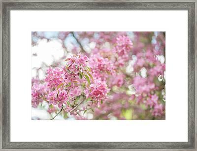 Spring Lightness Framed Print by Jenny Rainbow