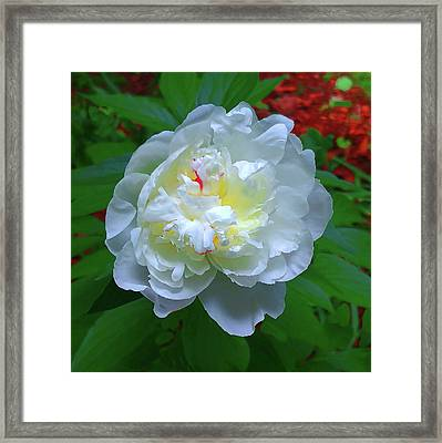 Framed Print featuring the photograph Spring Peony by Roger Bester