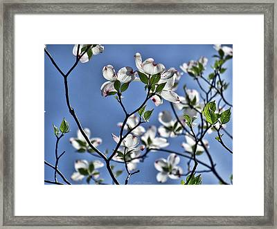 Spring Tree Blossoms Framed Print by Mikki Cucuzzo