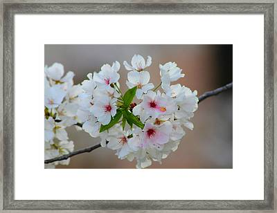 Springtime Bliss Framed Print