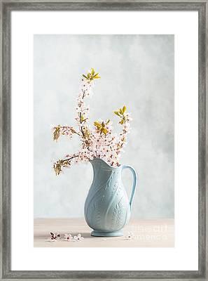Springtime Blossom Framed Print by Amanda Elwell
