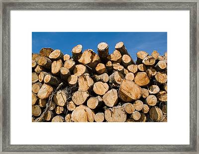 Stack Of Wooden Logs In The Landes Forest Framed Print by Sami Sarkis