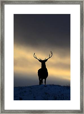 Stag Silhouette  Framed Print