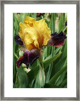 Standing Alone Framed Print by Bruce Bley