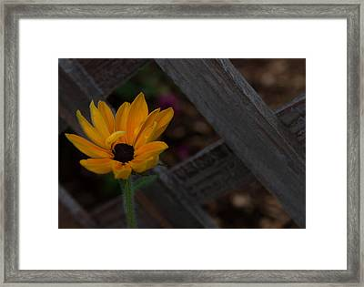 Framed Print featuring the photograph Standing Alone by Cherie Duran