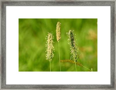 At Attention Framed Print by Betty-Anne McDonald