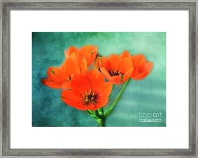 Framed Print featuring the photograph Star Of Bethlehem by Jutta Maria Pusl