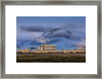 Starling Mumuration Framed Print by Ian Hufton