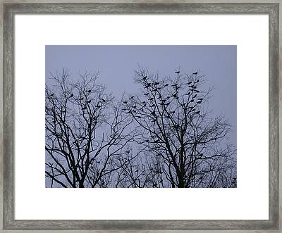 Starlings Framed Print